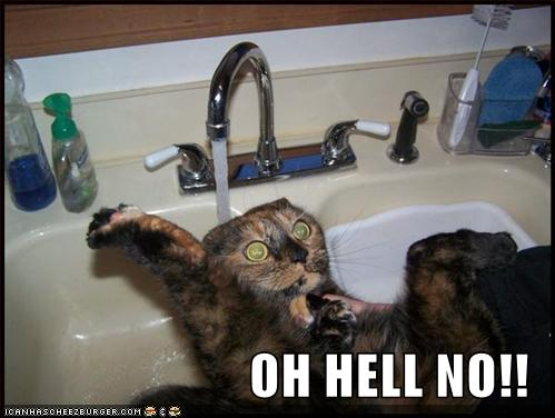 funny-pictures-cat-scared-sink-water1.jpg